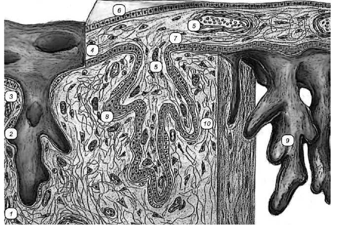 десмохориальная плацента